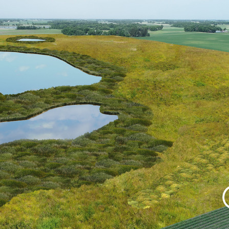 Image of Sibley Meadows Wetland Bank, Sibley County, Minnesota
